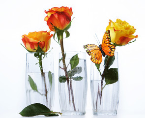 Three roses in transparent  glasses