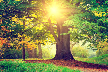 Beautiful park tree