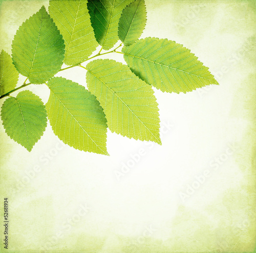 Abstract nature background leaves frame