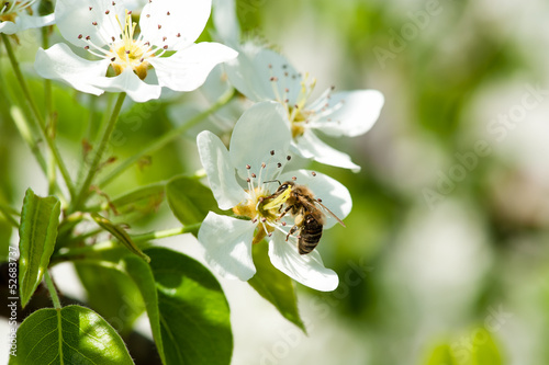 bee collects nectar