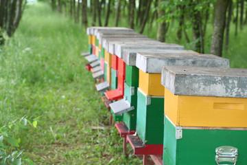 fila di arnie con api