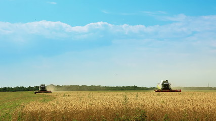 Harvesters gather the wheat