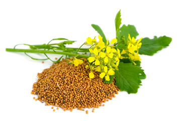 Mustard flowers and seed.