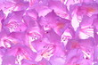 Rhododendron petals fresh natural background