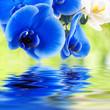bouquet de orquídeas y agua