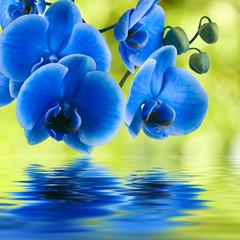 orquidea azul sobre fondo natural verde