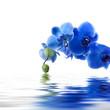 ramo de orquídea y reflejo en el agua