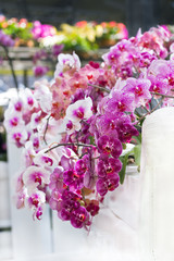 colorful moth orchids decoration