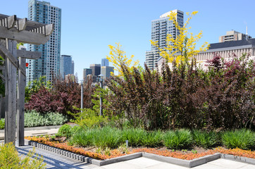 Green Roof against city skyline