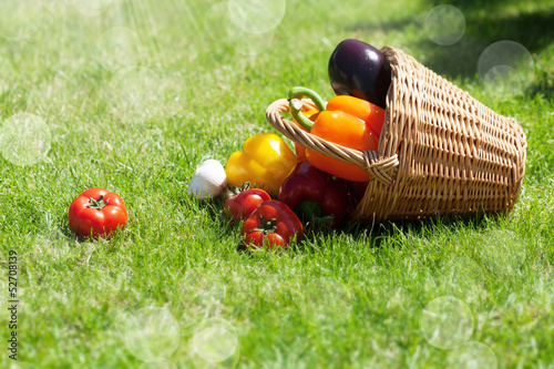 Fresh ripe vegetables in the basket