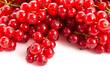 Rote Johannesbeeren