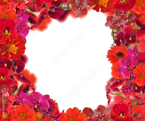 frame from different red flowers
