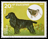stamp with the image of a hunting dog