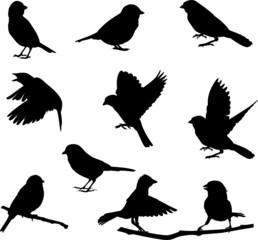 Bird silhouettes