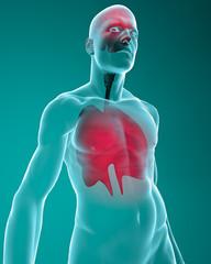 Corpo umano con cervello ai raggi x e apparato respiratorio