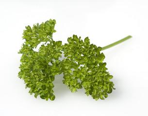 Petersilie, Petroselinum Crispum, Krause,