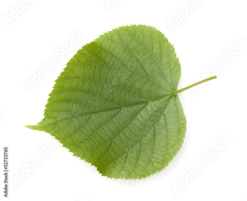 canvas print picture Winterlinde, Lindenblatt, Tilia Cordata
