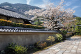 Cherry blossom in Arashiyama in the outskirts of Kyoto, Japan poster