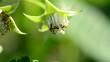 Bee pollinate a raspberry