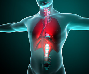 Apparato respiratorio polmoni raggi x