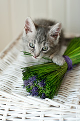 Pretty kitten and lavender on a white basket