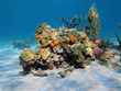 Colorful under water marine life