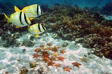 Starfish on sandy ocean floor