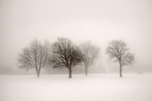 Drzewa w mgle zimowe