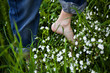 bare feet on green grass and flowers