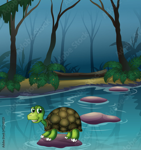 A turtle at the lake