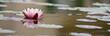 Lotusblüte Banner Hintergrund - 52748751