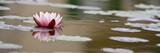 Lotusblüte Banner Hintergrund - Fine Art prints