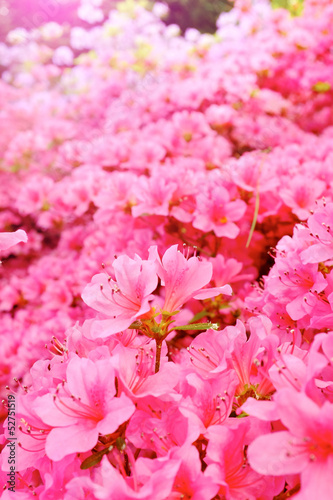 flowers blooming. Beautiful pink blossom