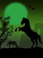 Black wild horses