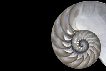 Beautiful Fibonacci pattern