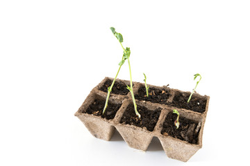 Seedbed on white background