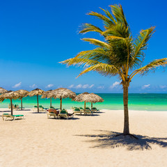Varadero beach in Cuba with a coconut tree