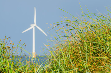 A view of a sea wind turbine generator throught green grass