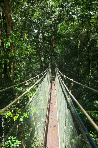 Canopy sky walk in rain forest