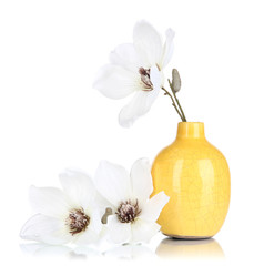 Beautiful magnolia in vase isolated on white