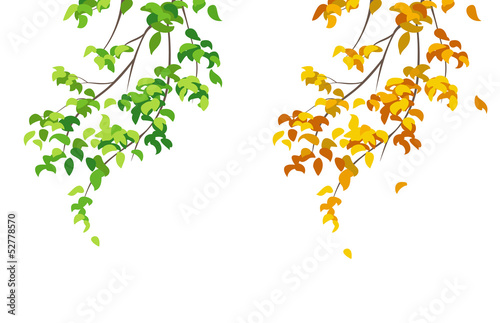 Green and yellow branches