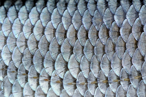 Spoed canvasdoek 2cm dik Textures Real Roach Fish Scales Background