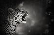 Fototapeten,leopard,portrait,gähnen,öffnen