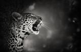 Leopard portrait - 52783556