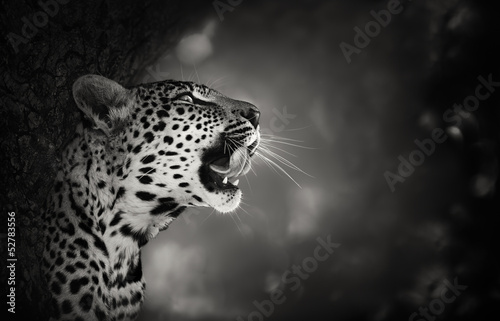 Canvas Luipaard Leopard portrait