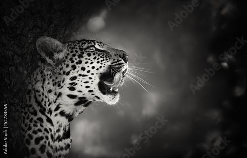 Fotobehang Luipaard Leopard portrait