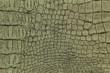 luxury crocodile texture or background