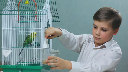 child playing with budgies