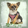 Dressed up Chihuahua sitting on green heart background, 9 months