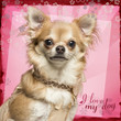 Close-up of a Chihuahua on flowery background